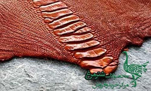صادرات پوست شترمرغ خام