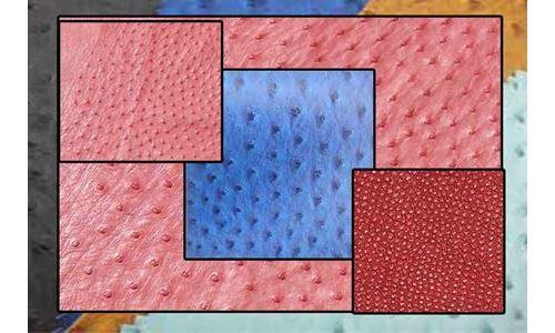 چرم تولید شده از شترمرغ