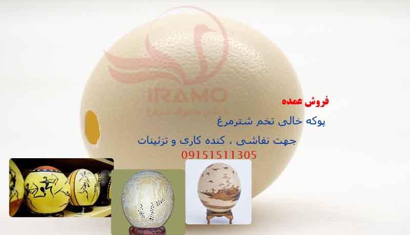 اطلاعاتی درباره تخم شترمرغ عمده